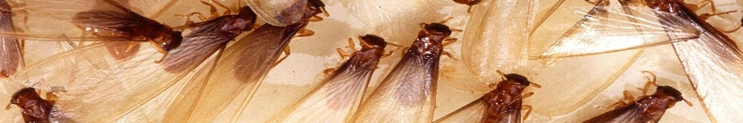 silverfish pest control near me | silverfish bug pest control | Get Rid of Silverfish | silverfish pest control company near Enterprise | Pest control | Hassman pest control